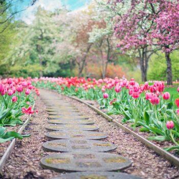 Korzyści wynikające z zaopatrywania się w dużym centrum ogrodniczym